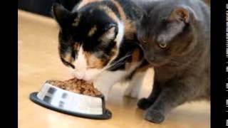 корм для кошек екатеринбург