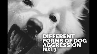 Michael Ellis on the Different Forms of Dog Aggression - Part 1