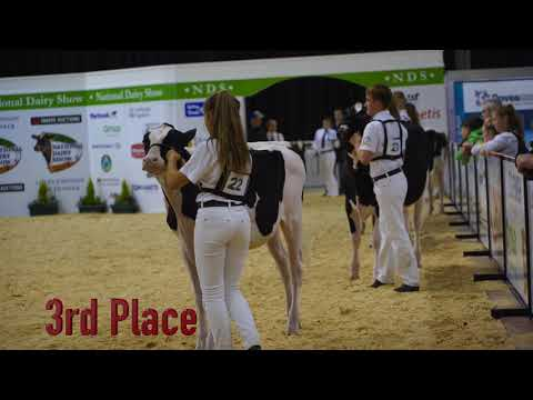 Showmanship - 13-16 Years.Judge -Michael Yates.National Dairy Show. Ireland.4K video