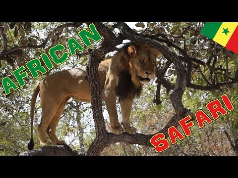 MY FIRST AFRICAN SAFARI | Welcome to Senegal