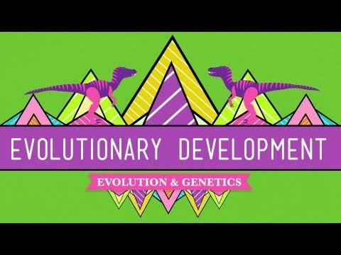 Evolutionary Development: Chicken Teeth - Crash Course Biology #17