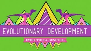 CrashCourse: Evolutionary Development thumbnail