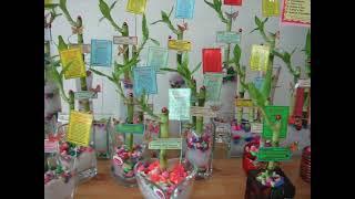 My Lucky Bamboo Plant At La Rissa Garden - Qatar