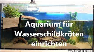 Aquarium für Wasserschildkröten-Haltung einrichten