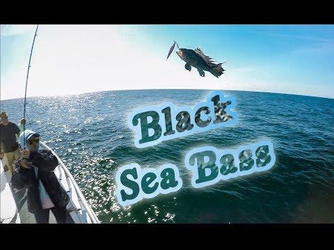 Black Sea Bass - Ocean Explorer NJ