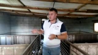 Бактерии для переработки свиного навоза спустя 2 года. Бактерии для свинарника