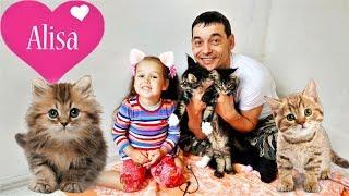 Алиса играет с котятами МЕЙН-КУН Смешные котята Детский канал Little baby Алиса