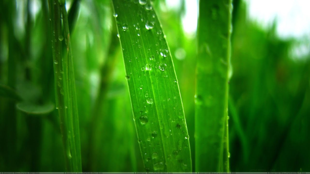 Beautiful Wallpaper Home Screen Rain - maxresdefault  Pic_91336.jpg