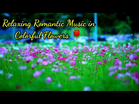 Relaxing Romantic Piano Music, Colorful Beautiful Flowers in Romantic Music, Stress relief Music