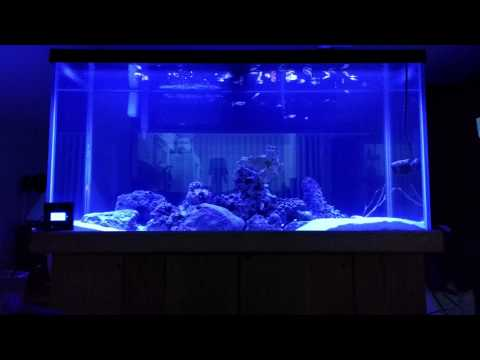 current usa orbit marine led 48 39 90 gallon tank