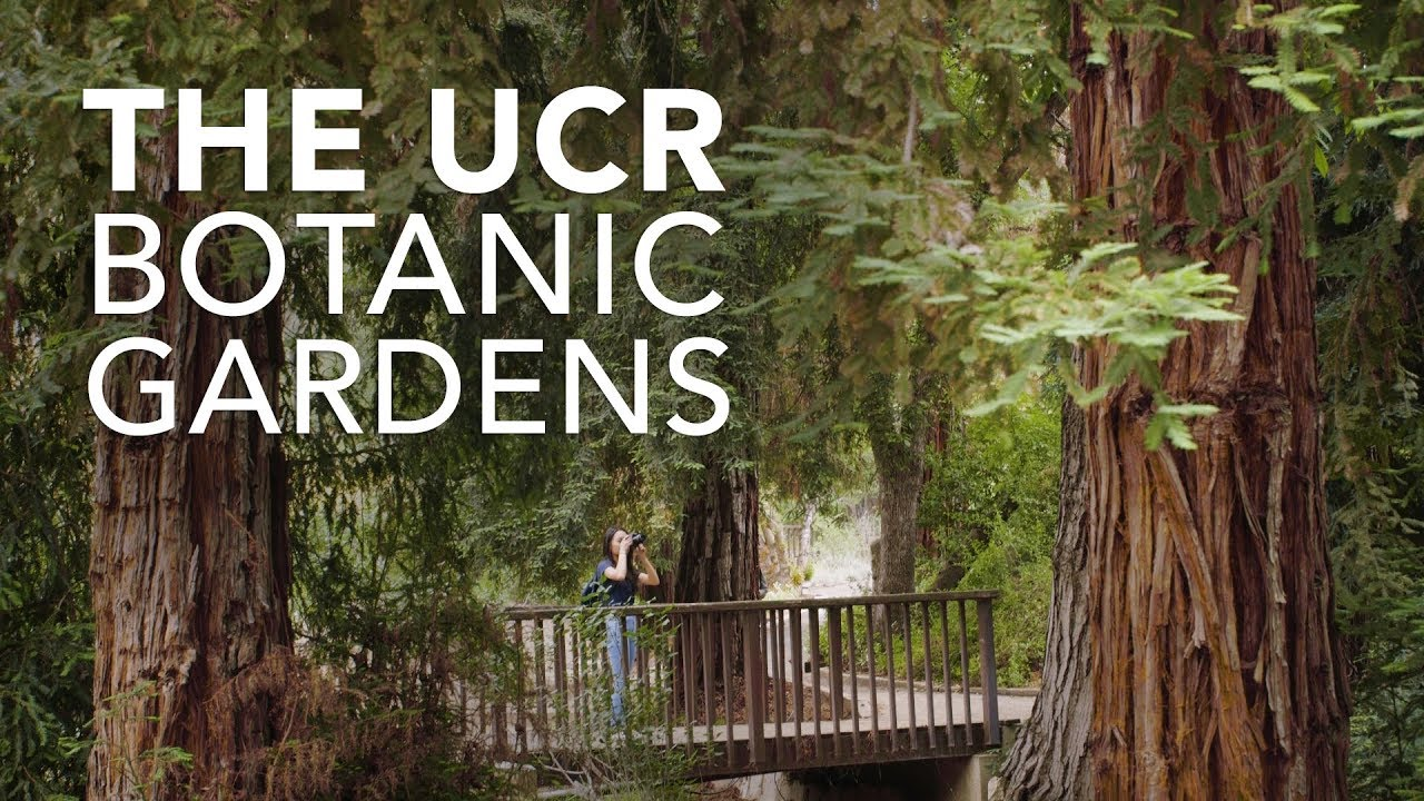 The UCR Botanic Gardens, a Living Museum - YouTube