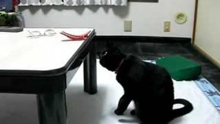 机の上にある髪留めクリップを猫パンチする猫叶姉妹のラブ。パンチの度...