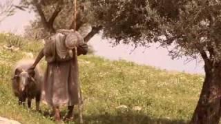 OliViva - Olive Leaf Extract