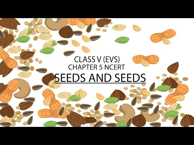 Seeds and Seeds | Class 5 EVS Chapter 5