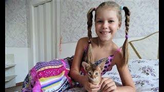 Абиссинские кошки - тоже наша семья