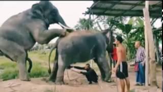 mms of Wild animal elephant