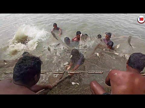 Best Fishing Video | Fishing In Beautiful Village Natural |  Fishing With Big Net