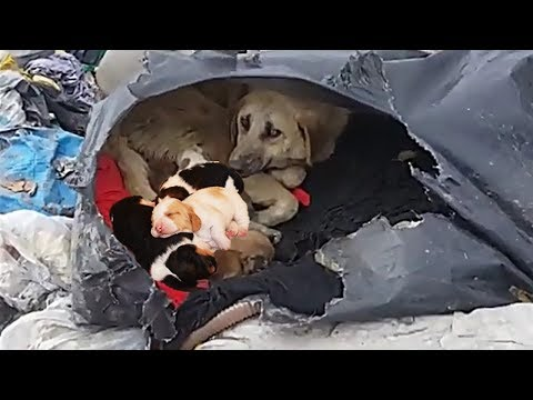 Rescue Dog | Heartbreaking For Wild Dogs Family Make Emotional, Inspiring Will Melt Your Heart