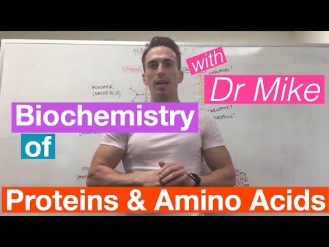 Proteins & Amino
