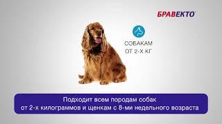 Бравекто -  таблетка от блох и клещей для собак