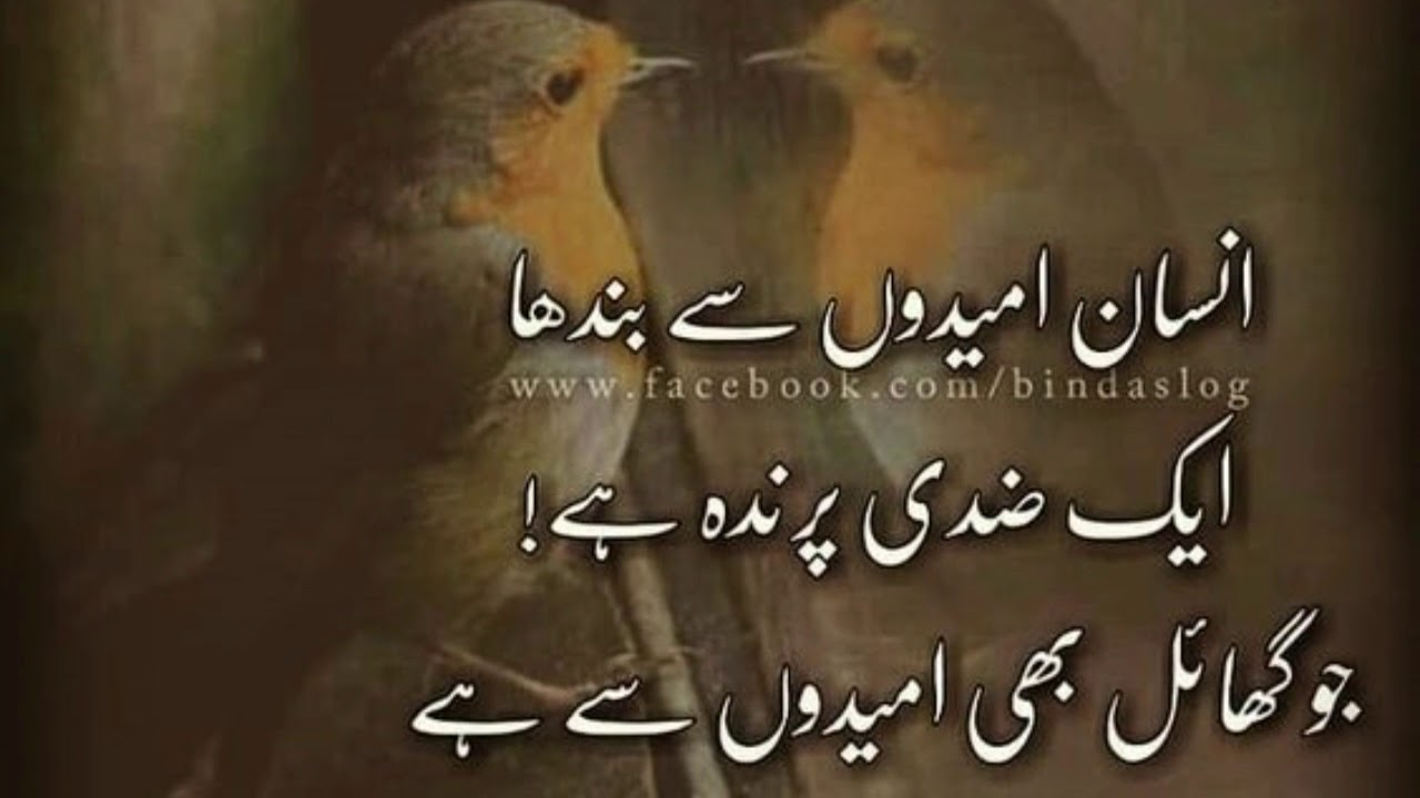 heart touching urdu quotes about human nature insan