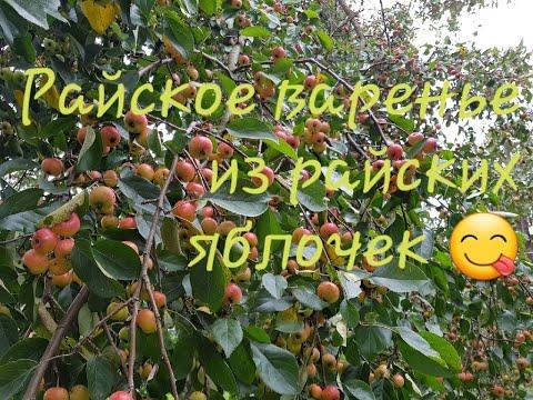 Душистое  и ароматное - варенье из яблок ранеток и черноплодной рябины.