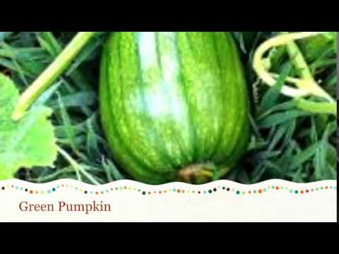 Life Cycle of a Pumpkin - YouTube