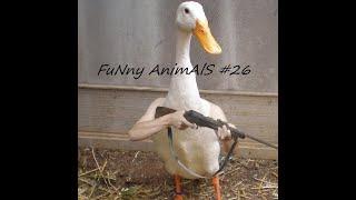 FuNny AniMalS 26 Смешные видео с животными Приколы с животными