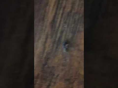 It's ALIVE! Morgellons Fiber & insect from lesion!