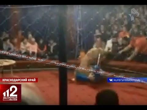 Шок: Львица набросилась на ребёнка и чуть не откусила голову. Видео!