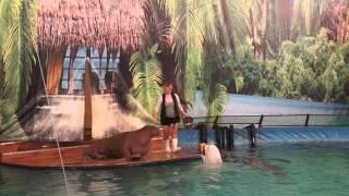 Дельфинарий на ВВЦ - 3. Моржиха Крошка ;)
