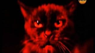 шпионы из космоса - черная кошка