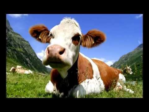 I am from Austria - Rainhard Fendrich Lyrics