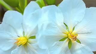 Dâng Lễ Mùa Xuân- Nhac& Lời : Chí Lân