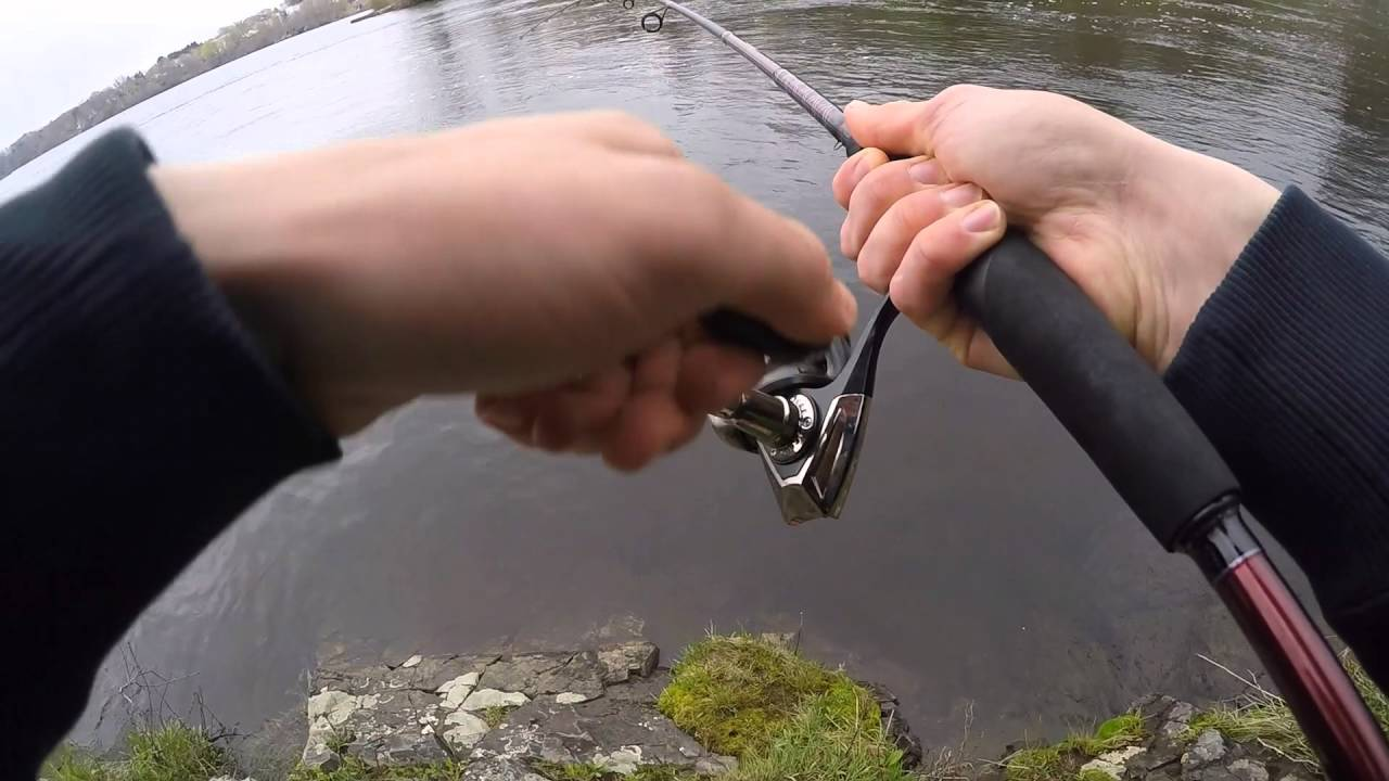Shad Fishing in the Saco River