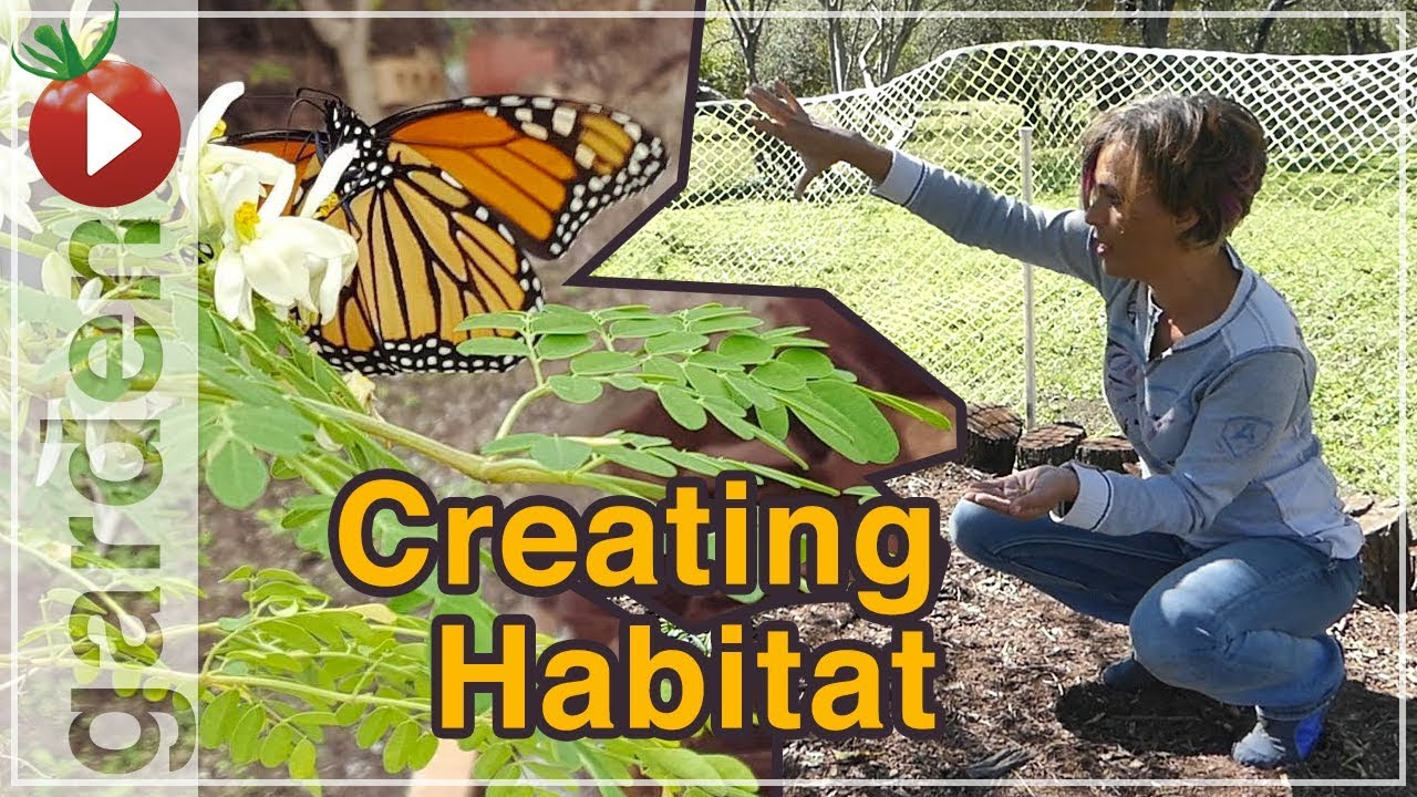 Building A Butterfly Garden   Cover Crops U0026 Wild Flowers   Part 3