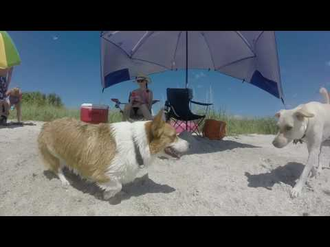 Fort De Soto Park's Dog Beach