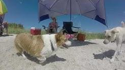Fort De Soto Park's Dog Beach