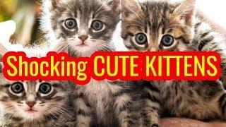 The world's cutest newborn kittens