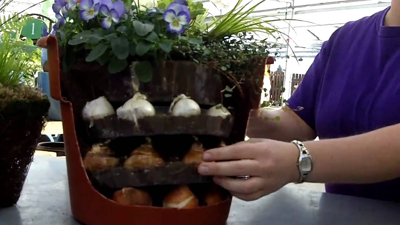 Planting tips for bulbs in a container youtube reviewsmspy