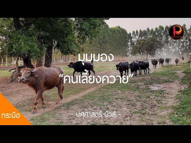 มุมมองคนรุ่นใหม่ที่มีต่ออาชีพเลี้ยงควาย สัตว์คู่บ้านคู่เมืองของไทย - ปศุศาสตร์ นิวส์