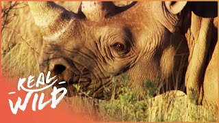Animal Kingdom - Hyena & Rhino [Documentary Series] | Real Wild YouTube Videos