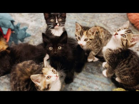 YouTubers Are Adopting My Kittens!