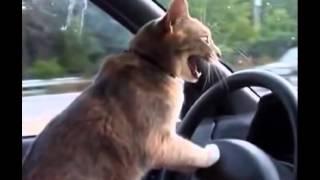 Нарезка забавные видео про кошек
