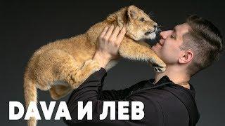 DAVA и его домашний лев - Грум и молния - о2тв