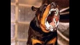 Контроль-АС шумовой по собаке