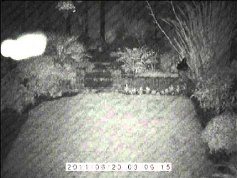 Night Footage from my cctv camera Orbs- or something strange visiting my  garden