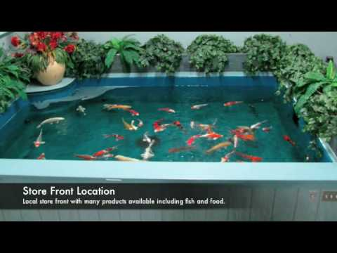 Japanese koi fish koi pond koi ponds koi fish ponds for Small pond filter design