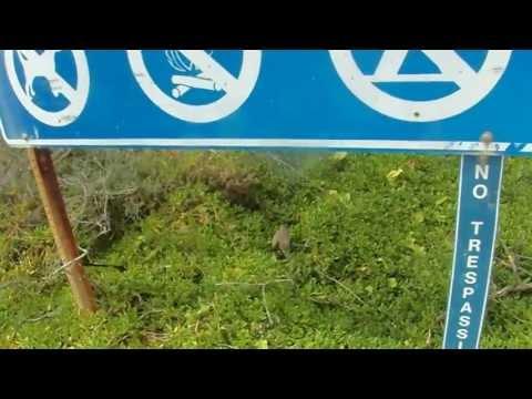 Endangered Wedged-tailed Shearwater Eggs Popoia Island Kailua HI Lanikai Beach Area