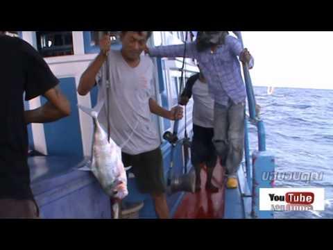 ตกปลา ทะเลตราด ตอนที่ 8 ตอน ฝ่าลมหนาวแรก By Roj Fishing